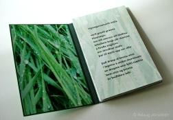 Rigningarsumarið mikla (2005)