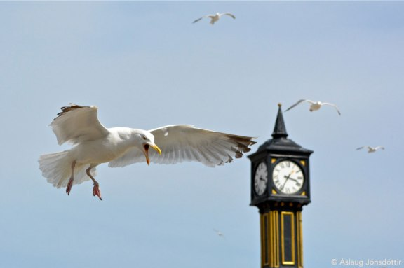 Brighton23AslaugJ
